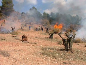 Quema de ramón en un olivar jienense. :: IDEAL