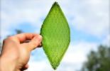 La primera hoja sintética es capaz de crear oxígeno