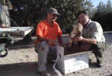 Photo of Al rescate de un Águila Culebrera, un ave en peligro de extinción en España