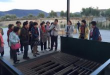 Photo of Los olivos de Jaén atraen al turismo Chino