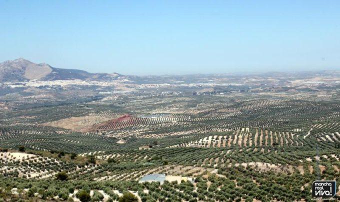 Vistas de olivares desde la sierra