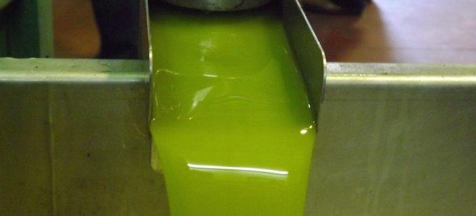 Aceite de oliva de cosecha temprana