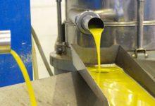 Photo of España produce 1767 toneladas de aceite de oliva, con poca diferencia de la campaña mayor de la historia