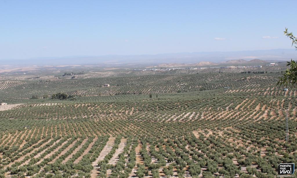 Photo of Las salidas de aceite de oliva son aún escasas por el retraso de la campaña