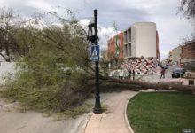 Photo of Un fuerte viento en Mancha Real hace caer peligrosamente árboles y contenedores