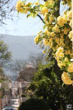 Los parques se llenan de flores