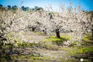 Impresionante el colorido que ofrecen los cerezos