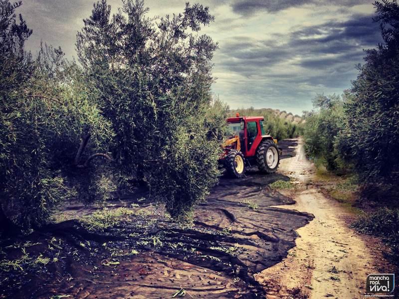 Photo of El paro bajó en noviembre en la provincia gracias a la agricultura