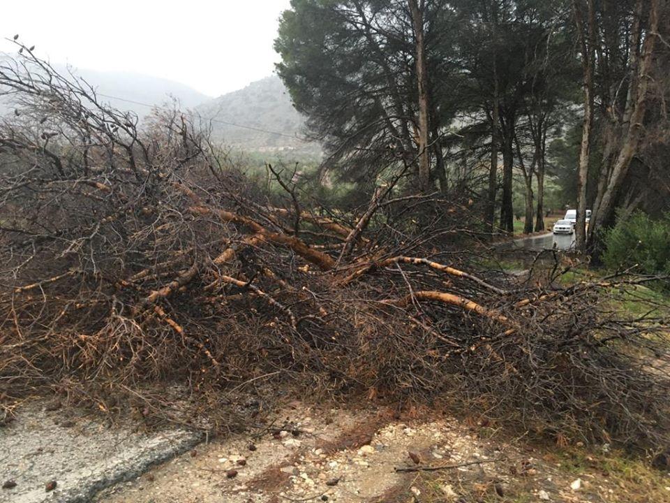 Photo of La carretera a Pegalajar ha sido cortada por la caída de un árbol