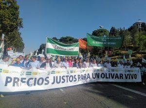 Photo of El sector olivarero puede paralizar la provincia por los bajos precios del aceite en origen