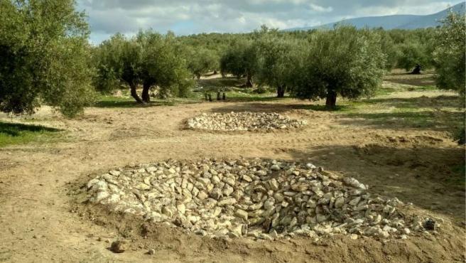 Photo of Construyen dos charcas para anfibios y plantan árboles para fomentar la biodiversidad del olivar