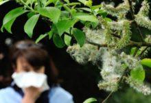 Photo of Se aproximan días complicados para los alérgicos con la floración del polen